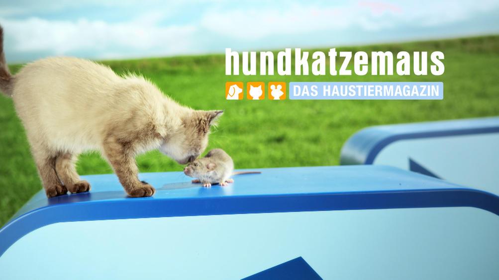 Hund Katz Maus